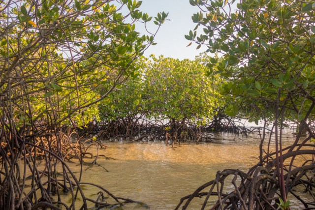 Mangrove forest 3 days in Nusa Lembongan itinerary