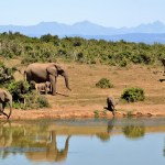 Best beach and safari destinations in the world