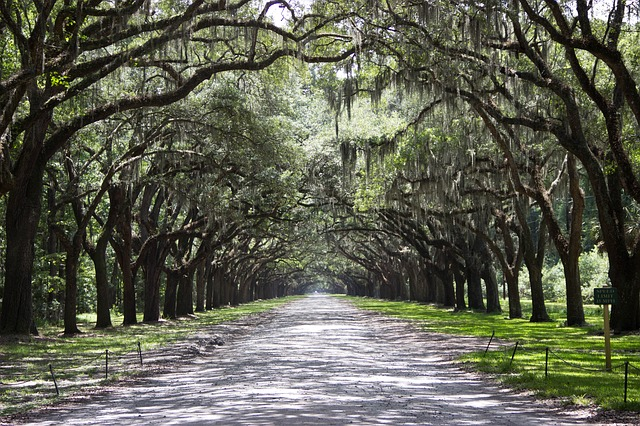 Savannah, Georgia is one of the best places to visit in the East Coast