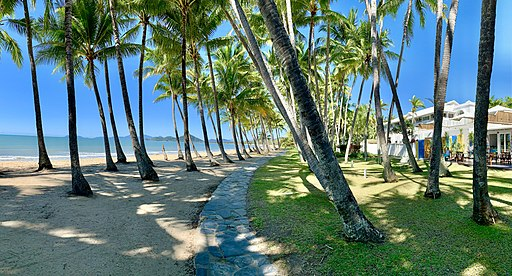 Palm trees at Palm Cove Beach Queensland