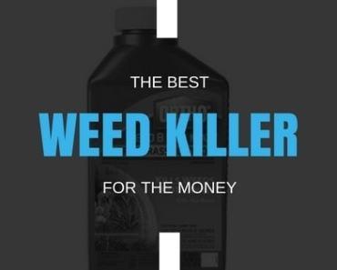Best Weed Killer