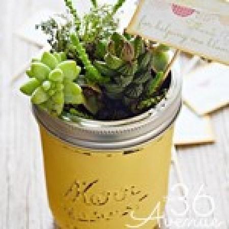 Mini Garden DIY Project