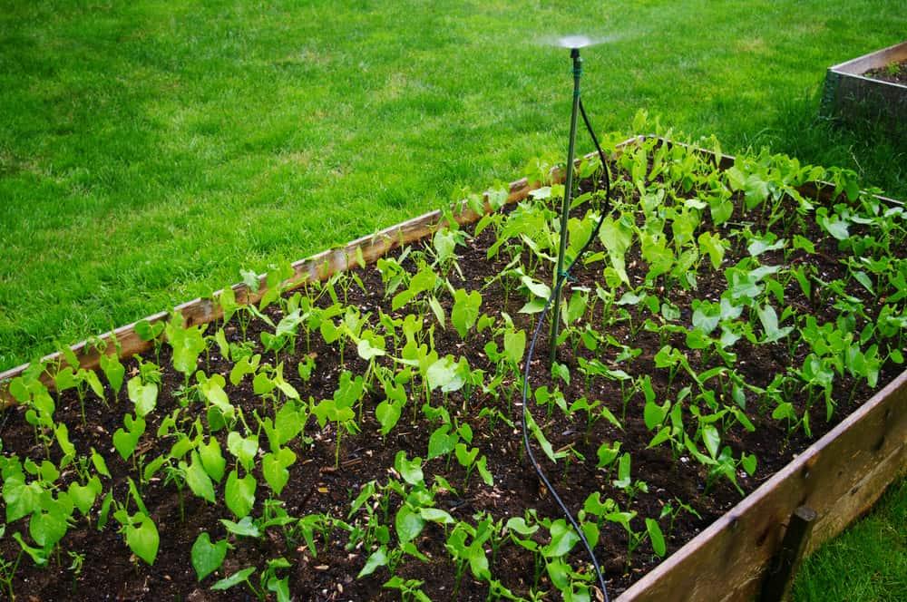 dark soil low garden