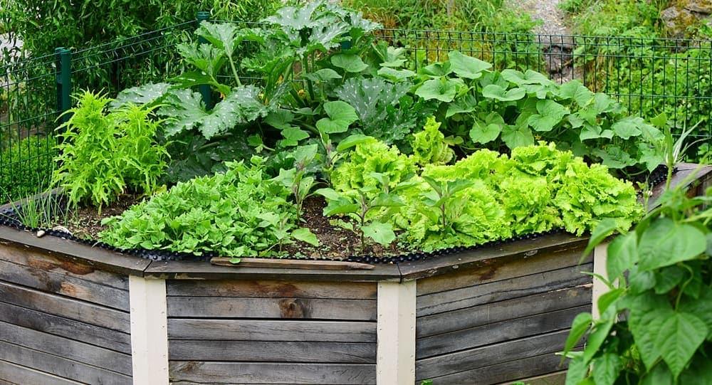 short greenery raised garden