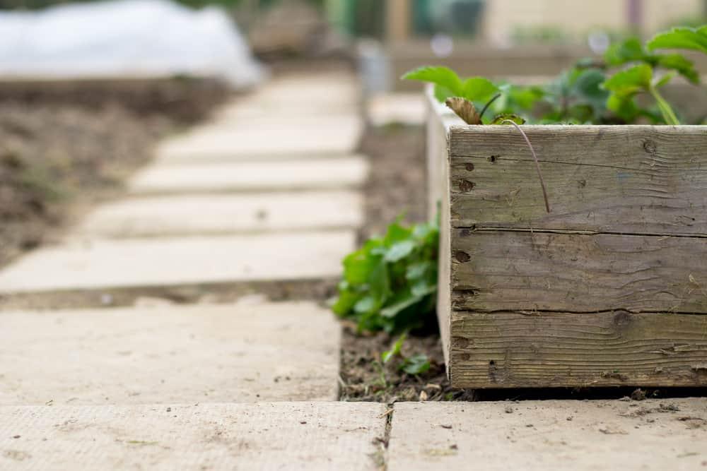 stepping stones around garden
