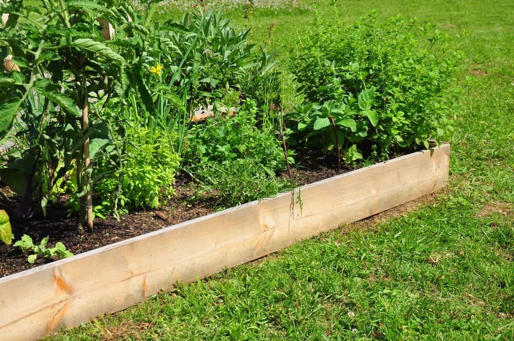 single plank long low garden
