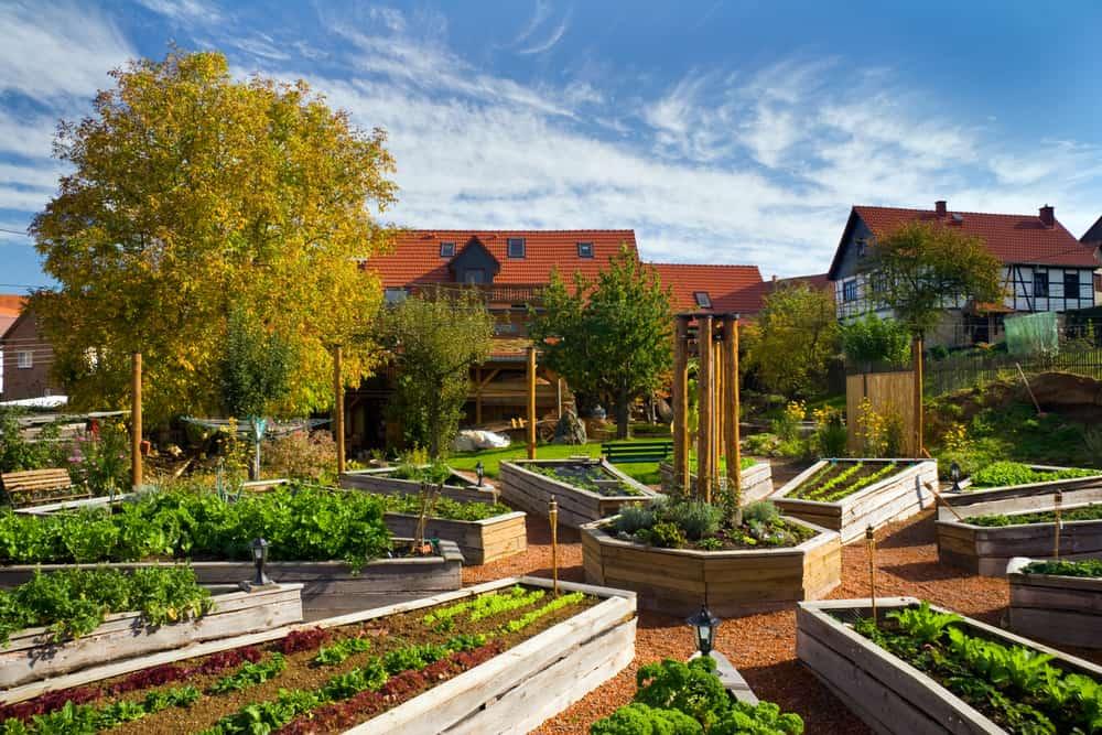 clock style raised gardens