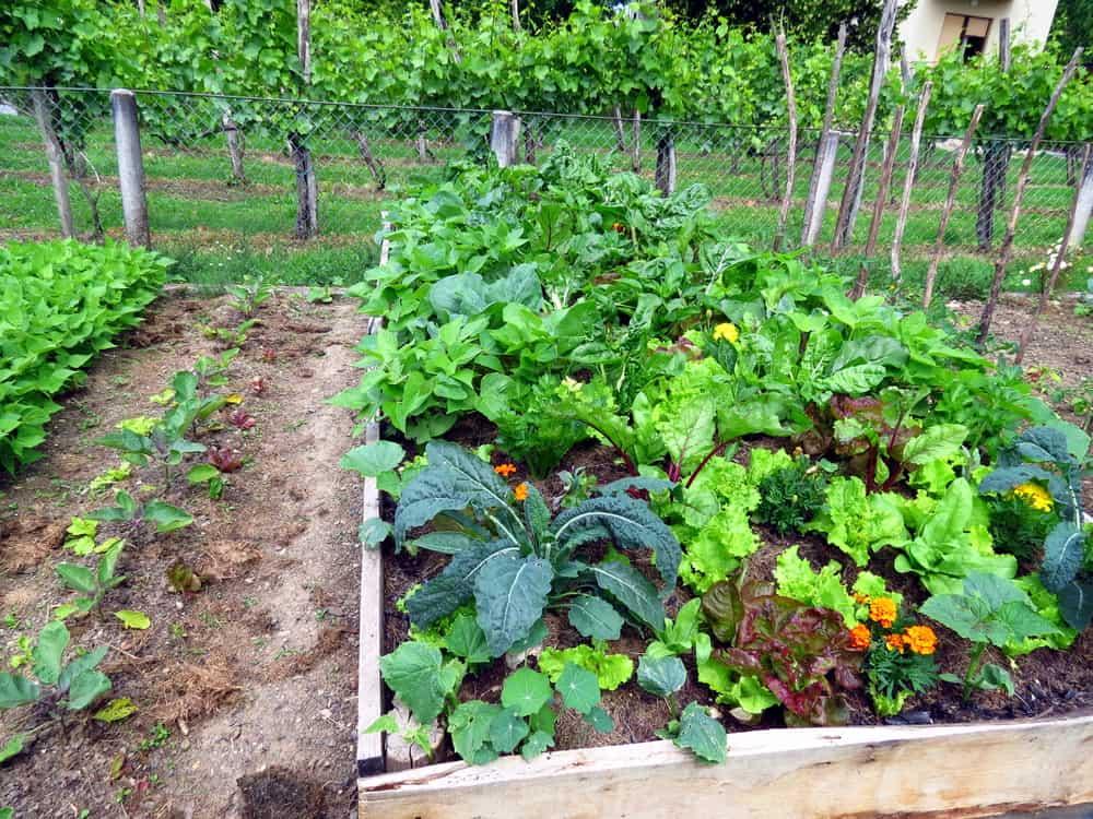 long raised garden
