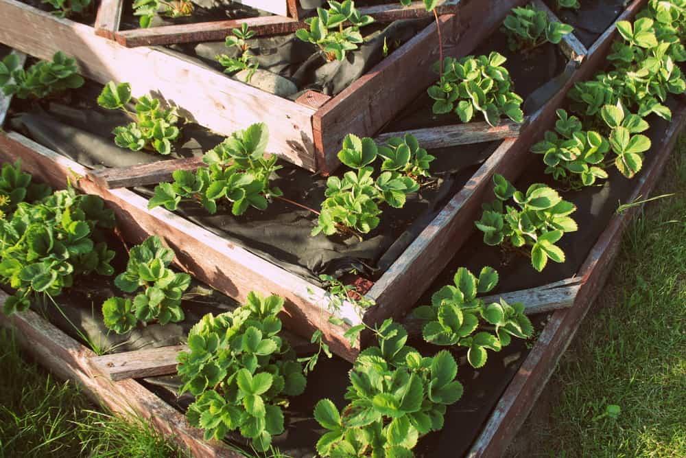 triangle chevron raised gardens