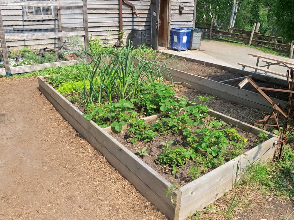 low rectangular garden