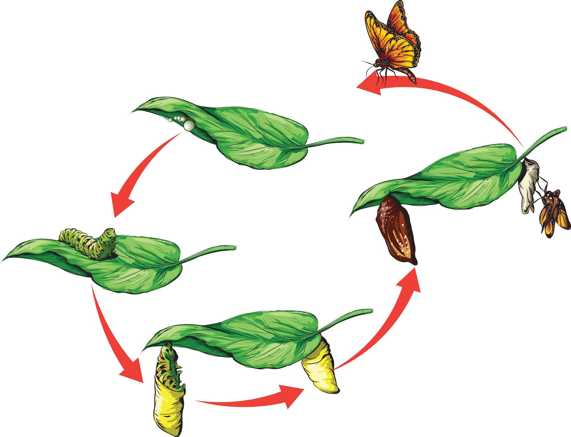 Life Cycles In Ks1 And Ks2