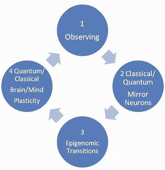 """Figure 11. The quantum observer/operator effect: The communication cycle that underpins the consciousness/unconsciousness transitions experienced in psychology: 1. Observing consciousness; 2. Classical to quantum transitions of mirror neurons; 3. RNA to DNA epigenomic brain plasticity transitions; and 4. Quantum to classical transitions on """"The Road to Reality"""" (Penrose, 2004), translational medicine and psychology (Rossi, 2002, 2012; Rossi & Rossi, 2016a, 2016b). The classical to quantum transition in Stage 2 underpins psychological transition from consciousness to unconsciousness in cognition and behavior. The quantum to classical transition in Stage 4 underpins the shift back from unconsciousness to consciousness in cycles of cognition and behavior. These horizons between the classical (conscious) and quantum (unconscious) transitions of normal everyday life have been aptly described (Cohen-Tannoudji, 1993; Penrose, 1994, 2004; Stewart, 1989, 2012)."""
