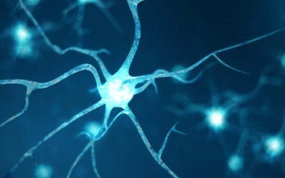Early Life Stress Hinders Neuron Development, Causing Attention Disorders