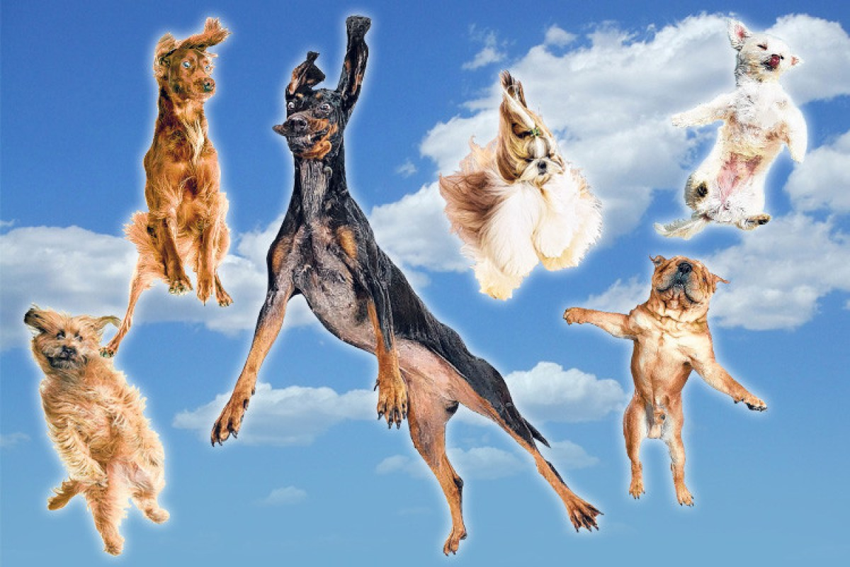 Bounce Dog Food Advert