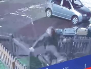 A drunken lout volleyed a cat into a garden in Edinburgh