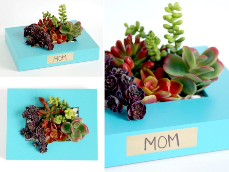 mothers-day-gift-succulents