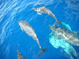 Go Pro Article - Dolphins