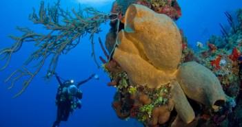 Focus Underwater at The Scuba News
