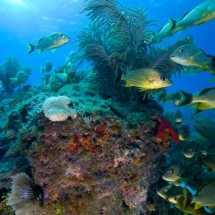 Carysfort Reef at The Scuba News