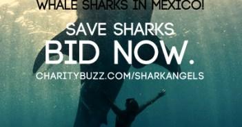 Shark Angels Auction at The Scuba News