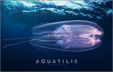 Aquatilis Expedition 10