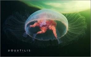 Aquatilis Expedition 22
