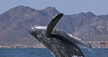 Protect Cabo Pulmo National Park