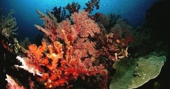 A Brief Guide To Diving Papua New Guinea