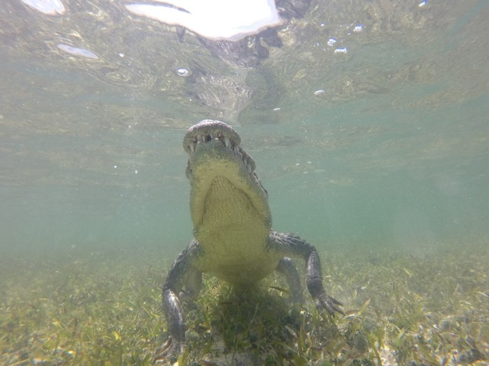 Get in the water with Crocodiles!