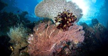 diving-in-raja-ampat