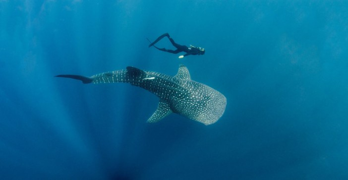 Boutique Beach: New Maldives Hotel in Whale Shark Region