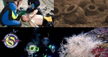 new-zealand-sea-adventures-specialty-courses-1