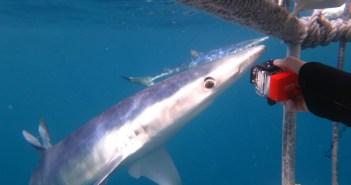 shark-diving-kathryn-hodgson-1