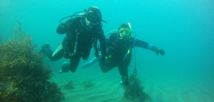 Becoming a better diver