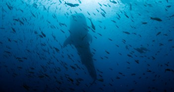 galapagos-scuba-tours-worldwide