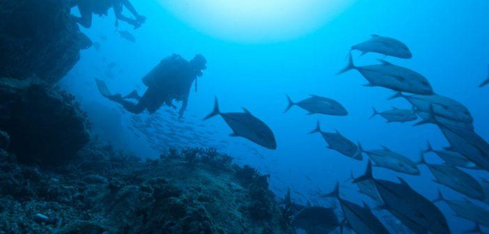 diving-comoros