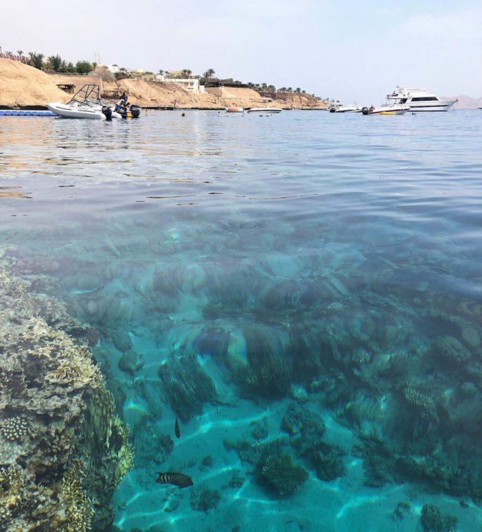 Sharks Bay Umbi
