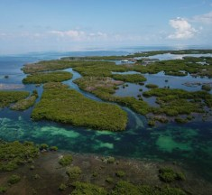 Blue Sanctuary – 3 Decades of Marine Conservation in Cuba