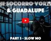 The Socorro Vortex (Part Three) – The Great White Sharks of Guadalupe