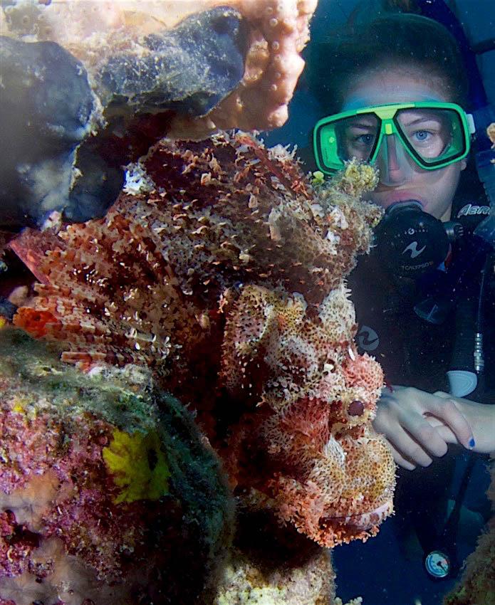A Beginner Diver's Journey -