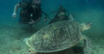 A Beginner Diver's Journey - The Scuba Place