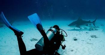 Pro Dive International Bull Sharks