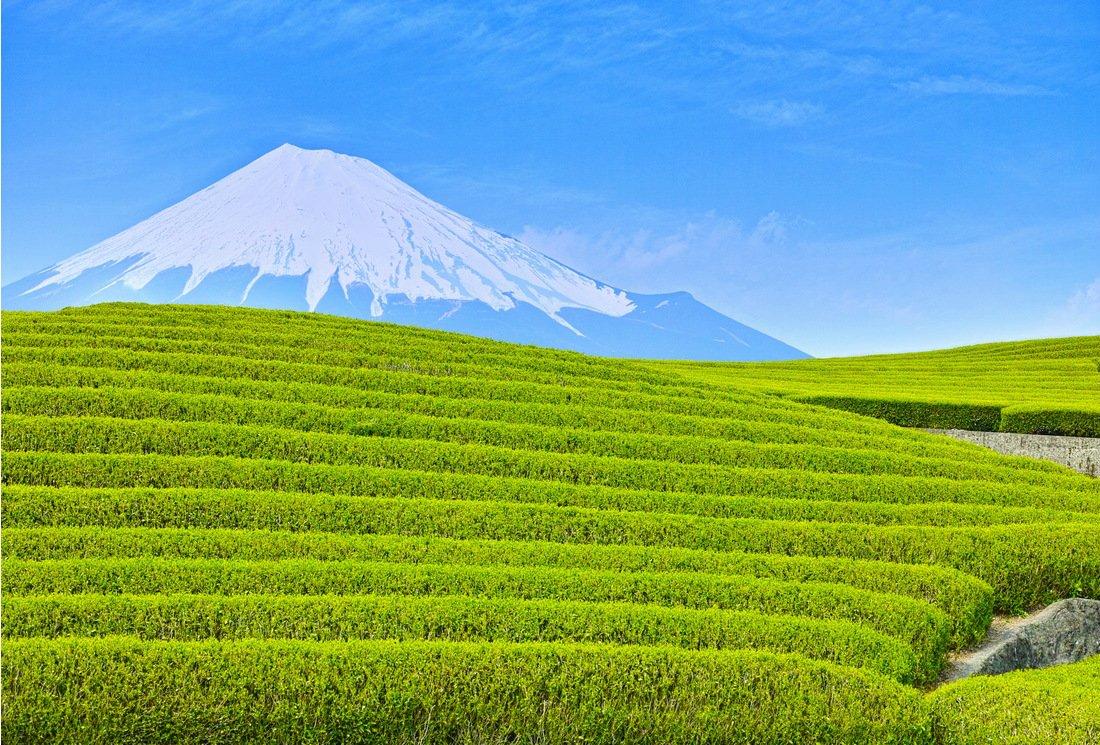 thes verts japonais ombres guide du