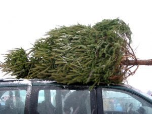 Christmas tree delivery service