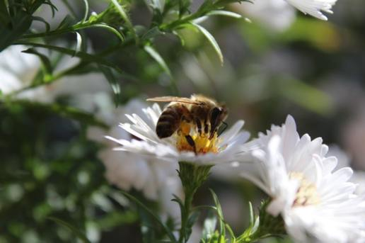 Attract the Bees