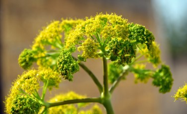 Many herbs will not only taste and smell good but will also produce pretty flowers.