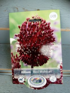 Allium 'Mohican' New for us this year! Deep coloured drum stick like flowers.