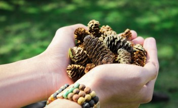conifer-cones-hands-holding-1076921