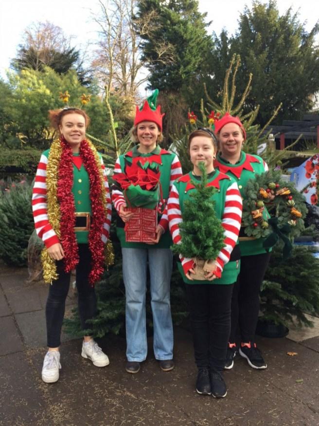 Our little elfs