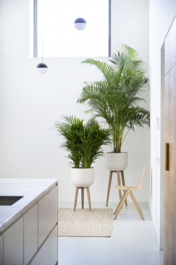 Palms add a soft look to any room